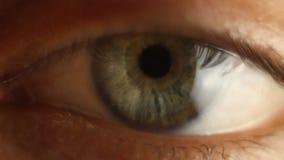Männliche Augennahaufnahme Blinkens, die herum schaut Rote Arterie auf dem Augapfelmakro Pupillereaktion zu beleuchten Mioz und M stock footage