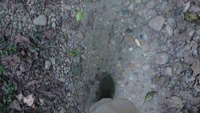 Männliche Beine, die bei Safari Tour gehen Ansicht von der ersten Personen-Perspektive POV stock video footage