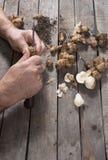 Männliche Hände, die Artischocke für Suppe mit Kopienraum zubereiten lizenzfreie stockbilder