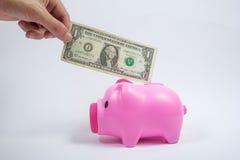 Männliche Hand, die Dollarschein in rosa Sparschwein setzt Lizenzfreie Stockbilder