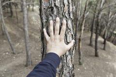 Männliche Hand, die einen Baum berührt Stockfotos
