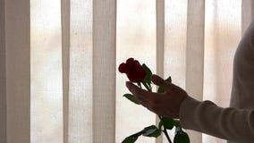 Männliche Hand und Blume stock footage