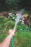 Männliche Hand, welche die Anlagen mit Gartenschlauch wässert Lizenzfreie Stockfotos