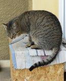 Männliche Katze der getigerten Katze, die auf einem Kasten sitzt Lizenzfreie Stockfotografie