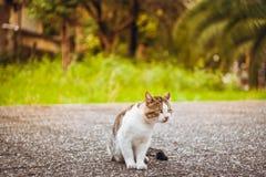 Männliche Katze, die draußen mit grünem Gras als Hintergrund sitzt stockbild
