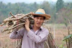 Männliche Landwirtstellung und Schultertapiokaglied, das den Stapel zusammen in den Bauernhof schnitt stockfoto