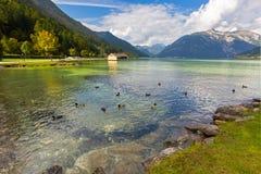 Männliche Stockenten, die im Achensee See im Schatten des blauen Grüns von f schwimmen Stockbilder