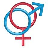 Männliche und weibliche Symbole, getrennt auf Weiß Lizenzfreie Stockfotografie