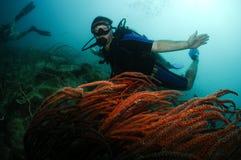 Männliche Unterwasseratemgerättaucherschwimmen über roter Koralle Stockfotos