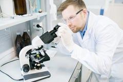Männlicher Biologe, der Lebensmittelfasern unter Mikroskop studiert lizenzfreie stockfotos