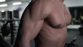 Männlicher Bodybuilder, der mit den Dummköpfen, Bizeps-Übung tuend ausarbeitet stock video
