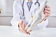 Männlicher Doktor, der vorbildliche Anatomie des Knieknochens hält lizenzfreies stockbild