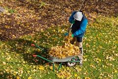 Männlicher Gärtner während des Herbstes Stockfotos
