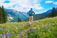 Männlicher gehender Wanderer die Spur in den Bergen mit wilden Blumen im Purpur und im Gelb. Stockbild