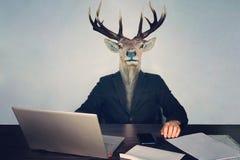 männlicher Geschäftsmann mit Rotwildkopf auf einem blauen Hintergrund im Büro am Schreibtisch Konzept des vernunftwidrigen Manage stockbild