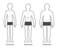 Männlicher Körperbau Diagramm Stockfoto