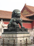 Männlicher Löwe (China) Stockbild