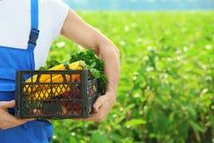 Männlicher Landwirt, der Plastikkasten mit Gemüse hält lizenzfreie stockfotos