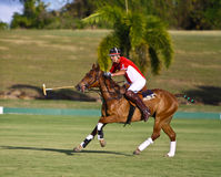 Männlicher Polo-Spieler Lizenzfreies Stockbild