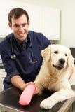 Männlicher Tierarzt, der Hund in der Chirurgie behandelt lizenzfreie stockfotos