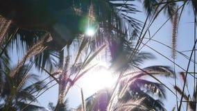 Männliches Handdia durch Ohren des Grases im Sonnenuntergang stock video footage