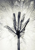Männliches Handschattenbild über Himmel und blattlosem Baummuster Stockfoto