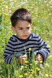 Männliches Kind auf einem Blumengebiet Stockbilder