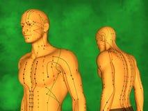 Mänsklig akupunkturmodell Arkivfoto