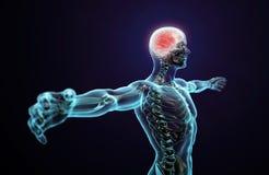 Mänsklig anatomi - centrala nervsystemet stock illustrationer