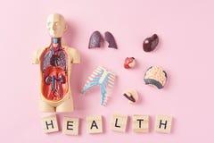 Mänsklig anatomiskyltdocka med inre organ och ordet HÄLSA på en rosa bakgrund Medicinskt vård- begrepp arkivfoton