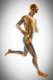 Mänsklig bild för benröntgenfotograferingbildläsning royaltyfri illustrationer