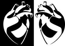 mänsklig bildvektor för hjärta Arkivfoton