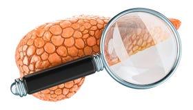 Mänsklig bukspottkörtel med förstoringsglaset Forskning och diagnos av det bukspottkörtel- begreppet, tolkning 3D stock illustrationer