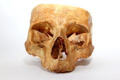 mänsklig gammal skalle Arkivfoto