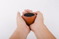 Mänsklig hand och jardiniere för träd Royaltyfria Bilder