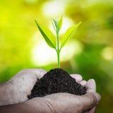 Mänsklig hand som rymmer den nya lilla växten med jord Fotografering för Bildbyråer
