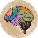 Mänsklig hjärna royaltyfri illustrationer