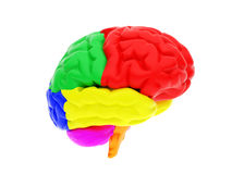 mänsklig hjärna 3d Arkivbild