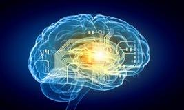 Mänsklig hjärna