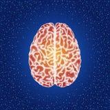Mänsklig hjärna Bästa sikt - vektor punkterad illustration Arkivbilder