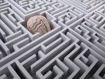 Mänsklig hjärna i labyrintlabyrinten Arkivbild