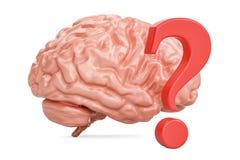 Mänsklig hjärna med frågefläcken, tolkning 3D Royaltyfri Foto