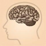 Mänsklig hjärna Sidosikt - vektor punkterad illustration Arkivfoton