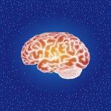 Mänsklig hjärna Sidosikt - vektor punkterad illustration Royaltyfri Foto