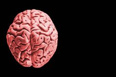 Mänsklig hjärna som isoleras på svart bakgrund med utrymme för fri kopia för text eller digital konstverkdesign en mänsklig hjärn royaltyfri fotografi