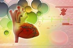 Mänsklig hjärta Royaltyfri Bild
