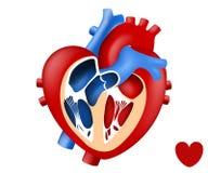 Mänsklig hjärta för designförälskelse in och ut royaltyfri illustrationer
