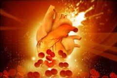Mänsklig hjärta med blodceller royaltyfri illustrationer