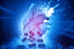 Mänsklig hjärta med blodceller vektor illustrationer