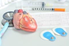 Mänsklig hjärtamodell arkivfoto